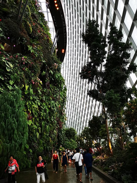gardens-by-the-bay34 Singapore-Gardens by the Bay之Flower Dome/Cloud Forest新加坡的巨大溫室...盛夏最好的去處
