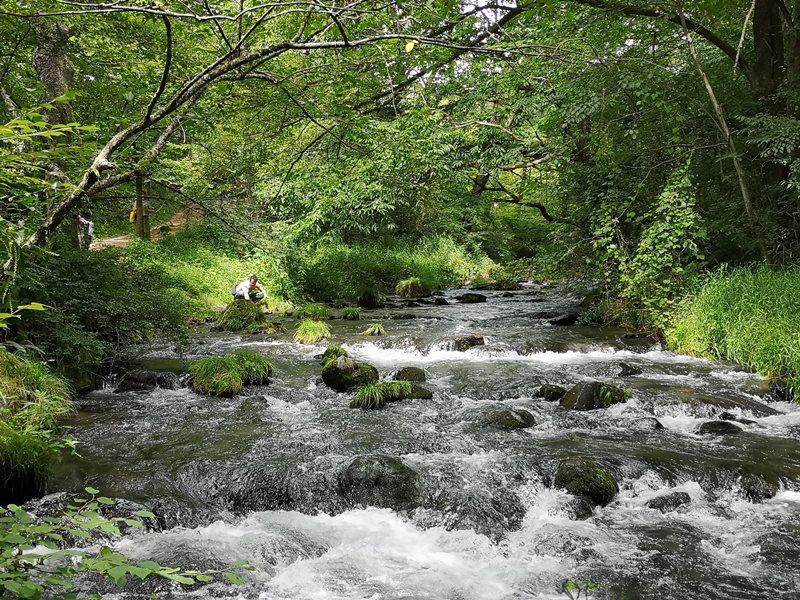 karuizawastreett17 Karuizawa-中輕井澤星野地區 榆樹街小鎮/高原教堂/石之教堂 品一口綠意的優閒雅致