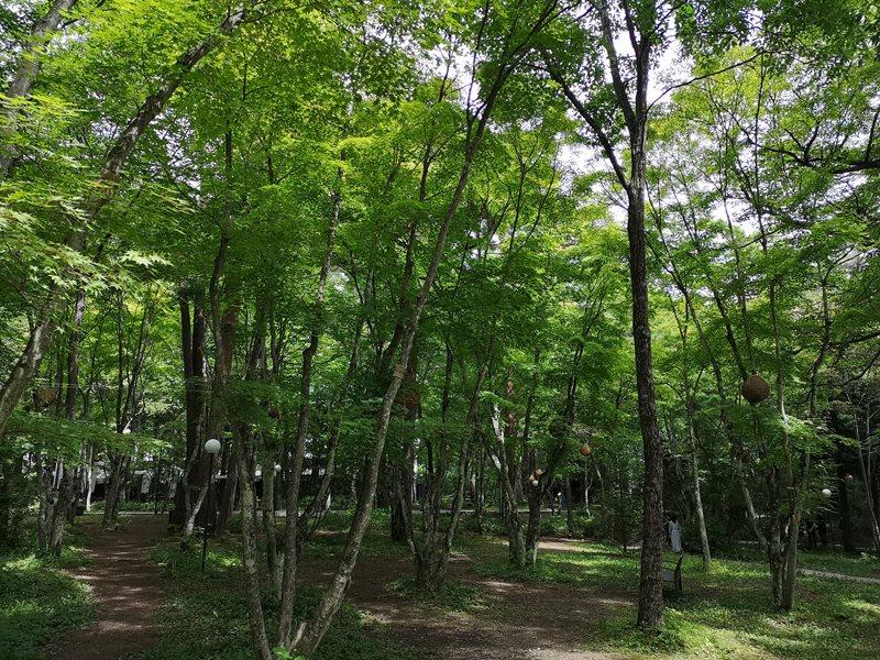 karuizawastreett24 Karuizawa-中輕井澤星野地區 榆樹街小鎮/高原教堂/石之教堂 品一口綠意的優閒雅致