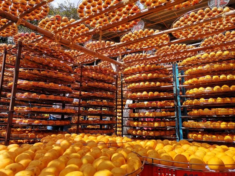 xinpu0127 新埔-味衛佳 北台灣秋天美麗的風景 好吃好玩好好拍的柿餅