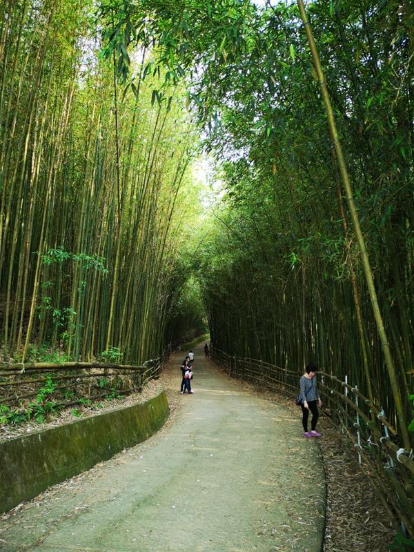 wugayen02 泰安-烏嘎彥竹林 台版嵐山竹林秘境