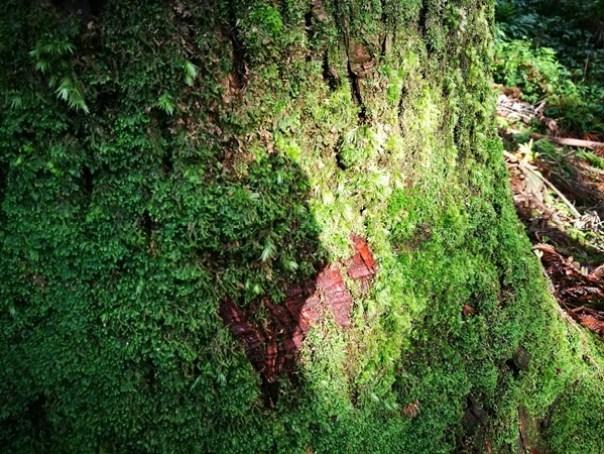 dongyen08 復興-東眼山 藍天白雲青山綠樹...景色壯觀視野開闊...還有美麗的彩虹