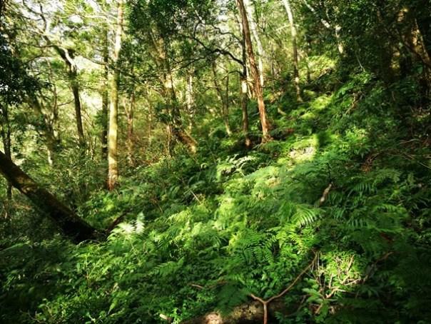 dongyen23 復興-東眼山 藍天白雲青山綠樹...景色壯觀視野開闊...還有美麗的彩虹