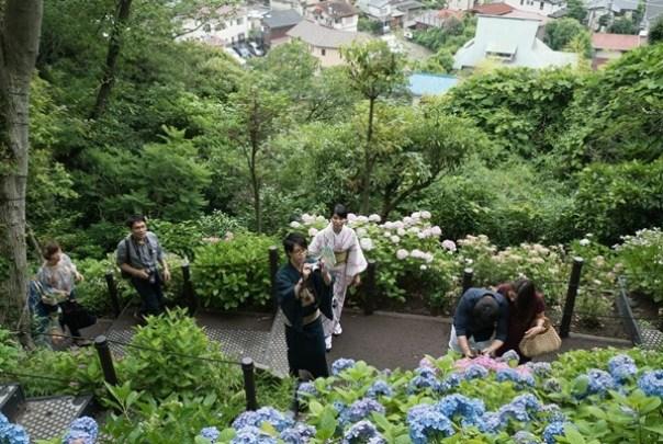 flowertemple39 Kamakura-鎌倉長谷寺 紫陽花季人山人海啊
