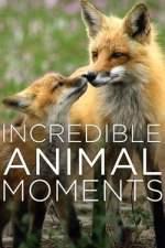 Incredible Animal Moments