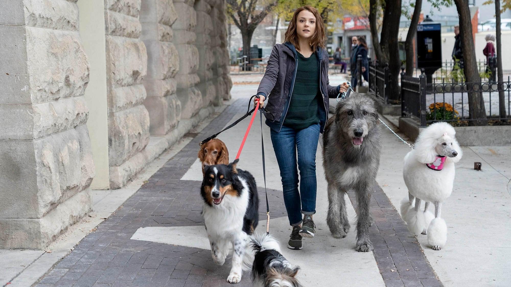 狗狗的旅程   iMovie4U電影線上看
