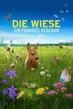 Die Wiese: Ein Paradies nebenan