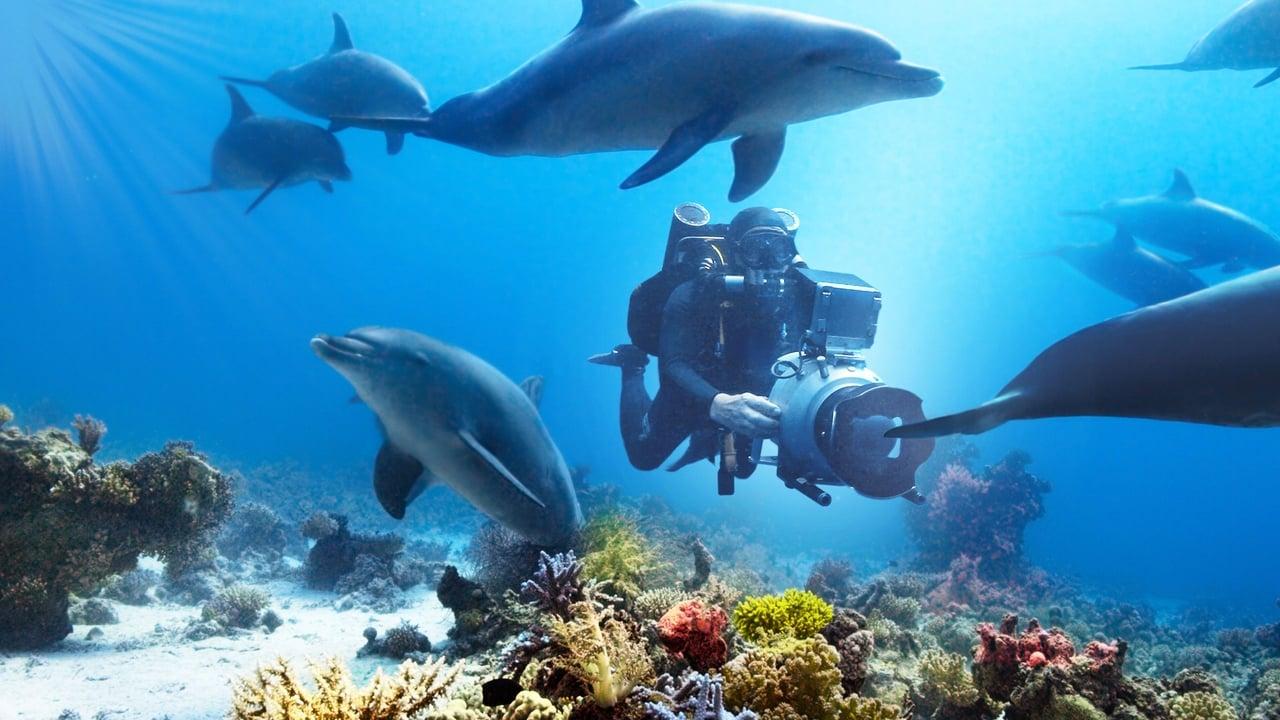 Imagenes de Nadando con delfines