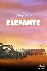 Ver Pelicula In the Footsteps of Elephant (2020) online