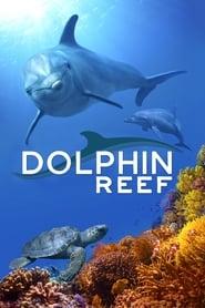 Delfines la vida en el arrecife