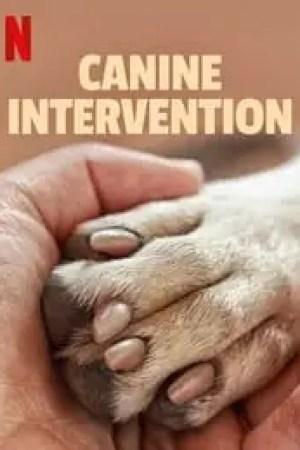 Portada Terapia Canina