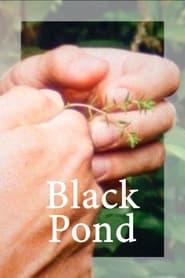 Black Pond Online