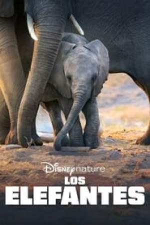 Portada Los elefantes