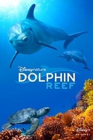 Delfines, la vida en el arrecife
