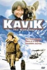 Kavik The Wolf Dog 1980