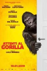 Attenti al gorilla 2019