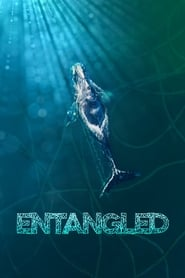 Watch Entangled: The Race to Save Right Whales from Extinction Online
