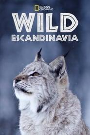 Imagen de Wild Nordic