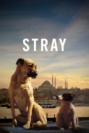 Poster Stray 2021