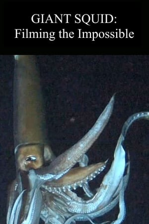 Image Giant Squid: Filming the Impossible