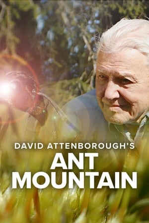 Image David Attenborough's Ant Mountain