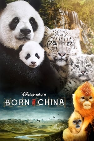 Image Born in China