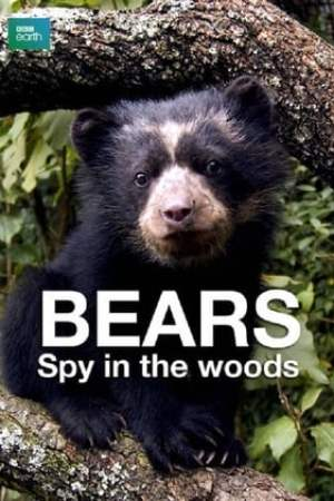 Image Bears: Spy in the Woods