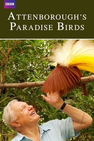 Image Attenborough's Paradise Birds