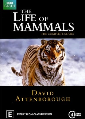 Image The Life of Mammals