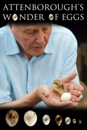 Image Attenborough's Wonder of Eggs