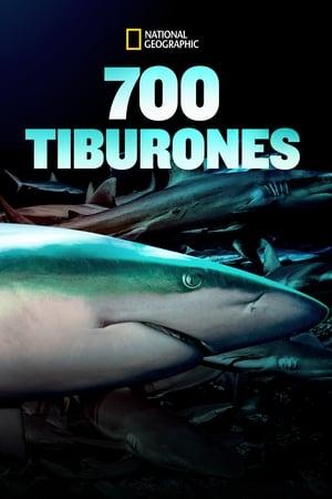 700 Tiburones poster