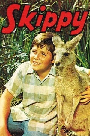 Image Skippy the Bush Kangaroo