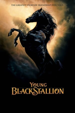 Image Young Black Stallion
