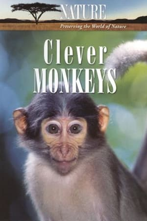 Image Clever Monkeys
