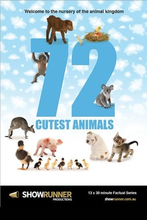 Poster 72 Cutest Animals 2016