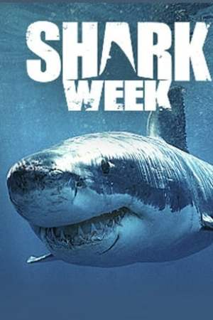 Image Shark Week