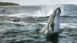 images Secrets of the Whales