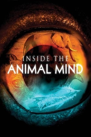 Image Inside the Animal Mind