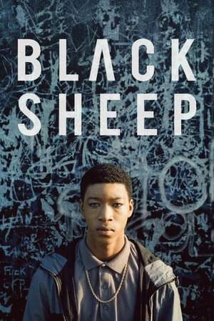 Image Black Sheep