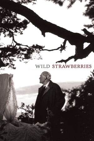 Image Wild Strawberries
