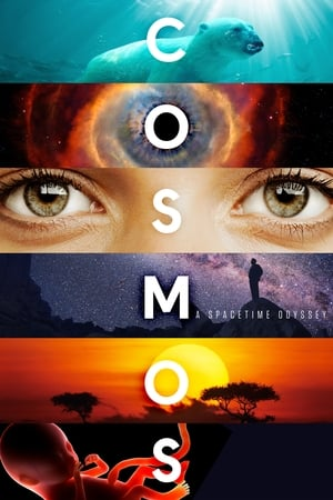 Image Cosmos: A Spacetime Odyssey