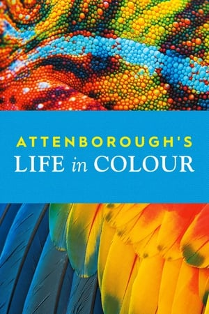Image Attenborough's Life in Colour