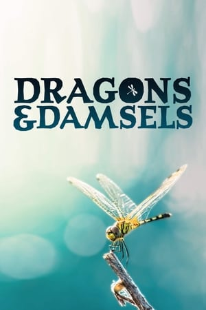 Image Dragons and Damsels