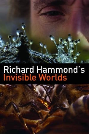 Image Richard Hammond's Invisible Worlds