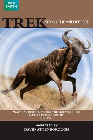 Image Trek - Spy on the Wildebeest