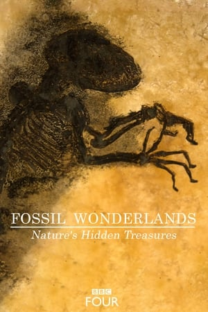 Image Fossil Wonderlands: Nature's Hidden Treasures