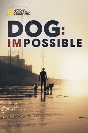 Image Dog: Impossible