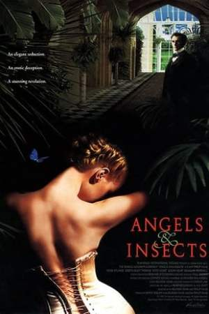Image Angels and Insects