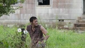 Watch The Walking Dead 2x4 Online