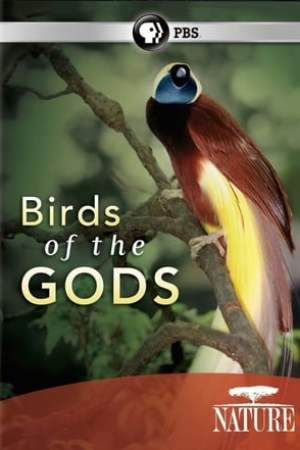Image Nature: Birds of the Gods